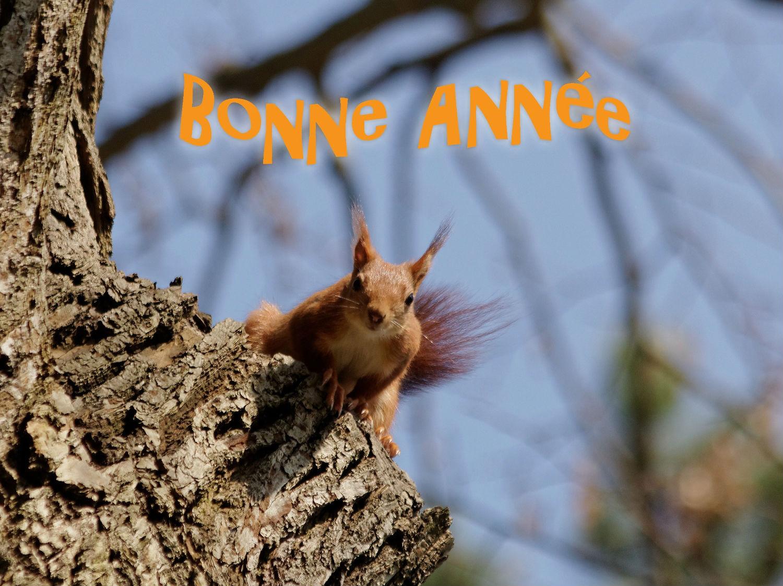 ecureuil roux  bonne année 2018 squirrel parc de Sceaux
