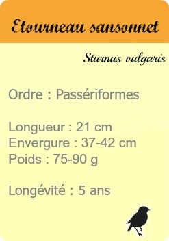 informations etourneau sansonnet - site les oiseaux de Paris - common starling