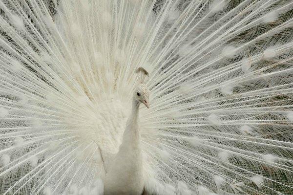 Les oiseaux de paris site de photos accueil - Faire peur aux oiseaux jardin ...