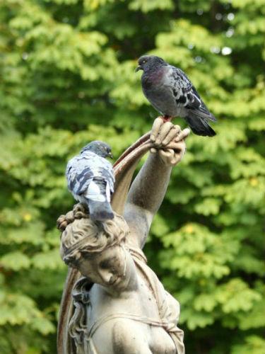 pigeon biset feral rock pigeon Paris oiseaux bird plume pain miette libre rue rassemblement