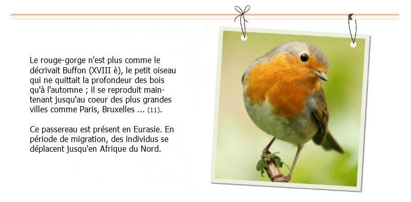 rouge gorge rouge gorge familier Paris parc parisien - robin